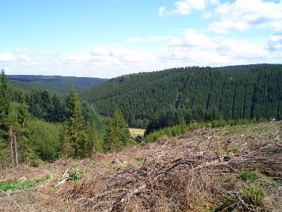Dreiherrenwald rodeten die Krinkelter und Rocherather sich ihre Siedlung frei. Dieser Wald prägte Jahrhunderte lang das tägliche Leben der Bevölkerung.