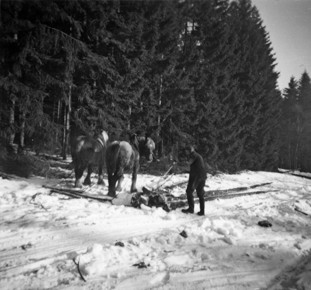 Holzschleppen1