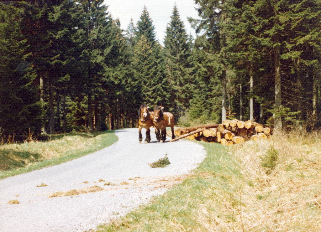 Holzschleppen5